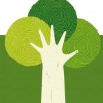 legno sostenibile